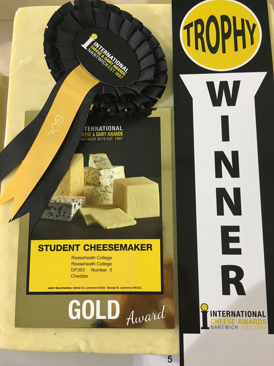 Gold Student Cheesemaker